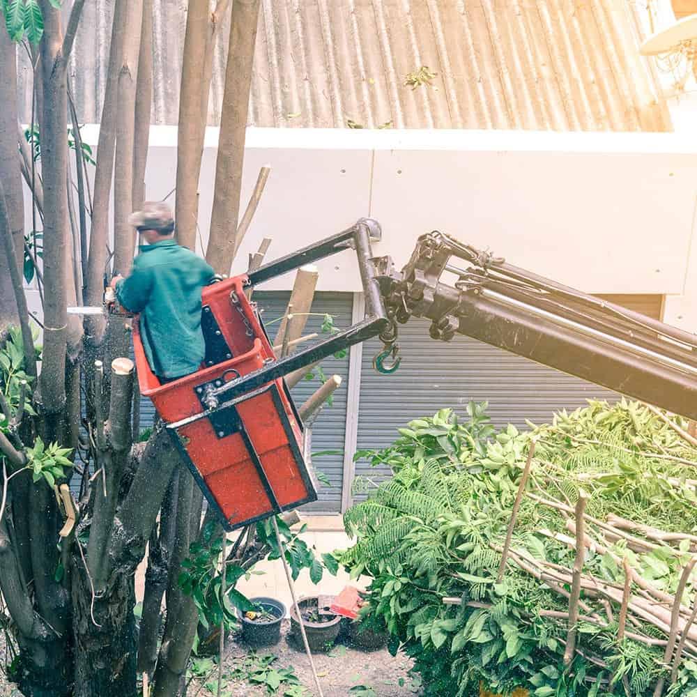 Solar-Energy-NJ-Tree-Removal-Smaller
